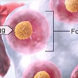 试管婴儿移植后,如何促进HCG翻倍?